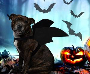 Halloween Pet Bat Wings